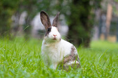 Счастливый зайчик на траве Стоковые Изображения