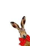 Счастливый зайчик Стоковые Фото