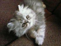 счастливый котенок Стоковое Фото