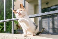 Счастливый кот щенка играя в заднем дворе Стоковая Фотография