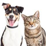 Счастливый крупный план собаки и кошки совместно Стоковая Фотография RF