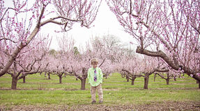 Счастливый мальчик стоя в цветя саде персика Стоковая Фотография