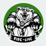 Счастливый медведь ехать велосипед Стоковое Фото