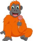 Счастливый орангутан с леденцом на палочке Стоковые Изображения