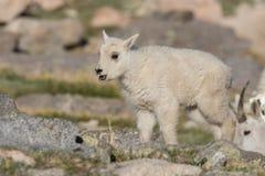 Счастливый ребенк козы горы Стоковые Фотографии RF
