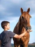 Счастливый ребенок подавая голодная и почетная лошадь Стоковые Фото