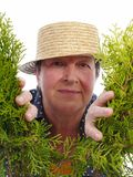 Счастливый старший садовник Стоковые Фото