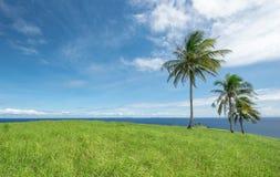 Счастливый травянистый холм Стоковые Изображения RF