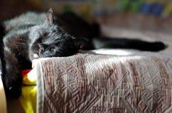Счастливый черный кот спать на кровати в солнечном после полудня Стоковые Изображения