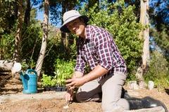 Счастливый человек засаживая деревце в саде стоковое изображение