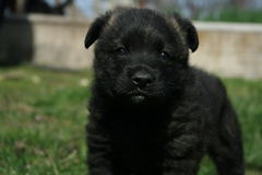 Счастливый щенок на траве весны Стоковая Фотография