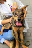 Счастливый щенок со своим предпринимателем Стоковое Изображение RF