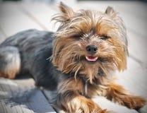 Счастливый щенок Стоковые Фото