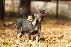 Счастливый щенок Стоковые Фотографии RF