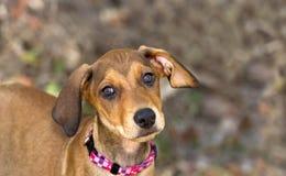 Счастливый щенок Стоковое Фото