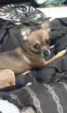 Счастливый щенок Стоковое фото RF