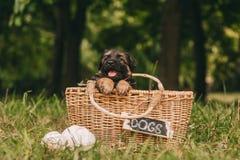 Счастливый щенок Стоковое Изображение