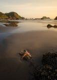 Счастливый seascape морских звёзд Стоковое Изображение RF