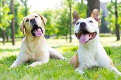 2 счастливых приятеля Стоковая Фотография RF