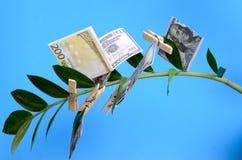 Счеты денег на зажимках для белья на ветви дерева денег на голубой предпосылке Стоковое Фото