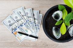 100 счеты доллара США и ростов дерева денег вверх в черном fl Стоковое Фото