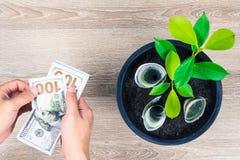 100 счеты доллара США и ростов дерева денег вверх в черном fl Стоковое Изображение
