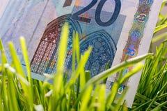 счет растя в зеленой траве, финансовая концепция евро 20 роста Стоковое Фото