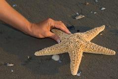 считать seastar Стоковые Изображения RF