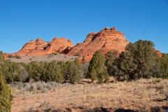 США, Аризона: Buttes койота южные - ландшафт с Buttes и можжевельниками песчаника Стоковая Фотография RF