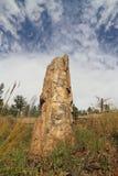 США, Вайоминг: Окаменелый Redwood в Йеллоустоне NP Стоковое фото RF