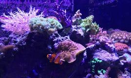 Съемка аквариума Стоковая Фотография