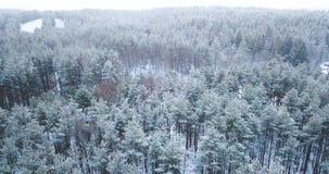 съемка антенны 4K Полет над ландшафтом зимы замороженного снежного елевого леса северным Взгляд сверху вектор природы предпосылки видеоматериал