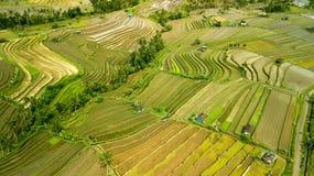 Съемка антенны ricefield Бали Стоковые Фото