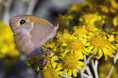 Съемка бабочки близкая поднимающая вверх Стоковые Изображения