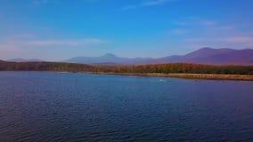 Съемка белого лебедя принимая от голубого озера в режиме sloumo от взгляда глаза птицы сток-видео