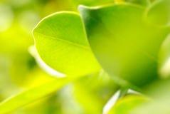 съемка богачей макроса листва Стоковое фото RF
