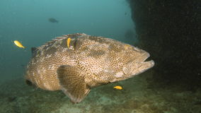 Съемка большой рыбы губ