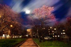 Дерево весны Стоковое Изображение