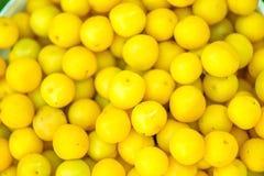 Съемка ведра свеже выбранных зрелых желтых, малых слив Стоковые Фотографии RF