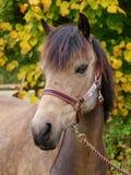 Съемка головки лошади Стоковое Изображение RF