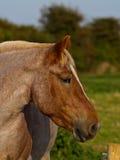 Съемка головки лошади Стоковое фото RF