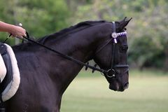 Съемка головы лошади Стоковые Фото