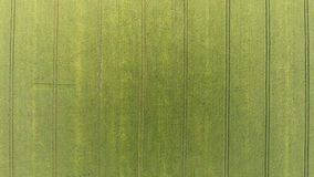 Съемка зеленого кукурузного поля круговая воздушная вспахивает линии и картины - камеру смотря вниз акции видеоматериалы
