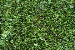 Съемка зеленой предпосылки лист горизонтальная Стоковое Изображение RF