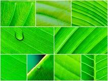Съемка зеленых листьев, предпосылка макроса картины природы Стоковое Изображение RF