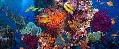 съемка Красного Моря рыб коралла Стоковое Фото