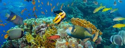съемка Красного Моря рыб коралла Стоковое Изображение RF