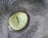 съемка макроса глаза кота большая Стоковая Фотография RF
