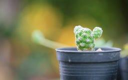 Съемка макроса кактуса Стоковое Фото