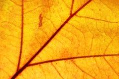 Съемка макроса листьев Стоковая Фотография